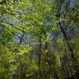 『「春山青春水碧」新緑の季節』の画像