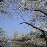 『お堀の桜』の画像
