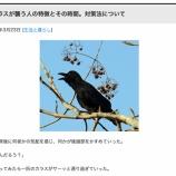 『(戸田市)繁殖期のカラスにご注意 カラスが襲う人の特徴と対策』の画像