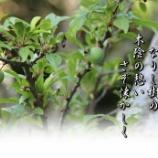 『巴旦杏』の画像