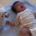 泣いている赤ちゃんにおやつをあげる犬