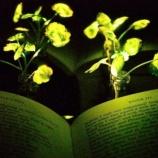 『植物ナノバイオニクス』の画像