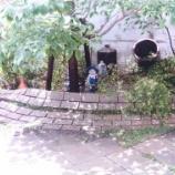 『小人の住む庭\(^o^)/』の画像