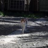 『初猫』の画像
