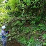 『伐採に草刈り仕事』の画像