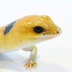 爬虫類クラブJ 横須賀店ブログ