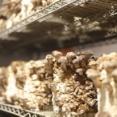 廃墟化したパリの地下駐車場をキノコ栽培農場に。都市部での農業開発へ向けた新たなる試み(フランス)