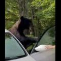 熊って足音殺して近寄ってくるんだ。被害者寝てたかな?怖いね『車内で休憩中の男性、窓の外に右腕を出していたら…クマに4か所かまれる』