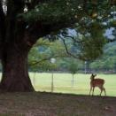 鹿、鹿、Deer