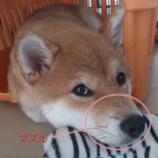 『犬への罰としてやってはいけないNG行為4選』の画像