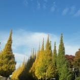 『外苑の銀杏並木は・・・』の画像