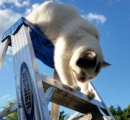 意外な場所で固まる猫【画像】