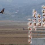 『フォト短歌「一羽のノリス」』の画像