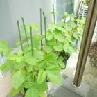『おやじ豆と生姜と梅干しと……』の画像