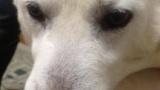 うちの犬がどう見てもソフトバンクの犬にしか見えないんだが