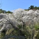 『桜の名所を訪ねて2020』の画像