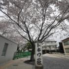 『トキワ荘と桜と不思議な縁 2020/05/03』の画像