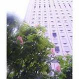 『新宿に咲く花』の画像