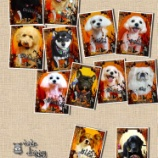 『2013-10-25のわんちゃん達』の画像