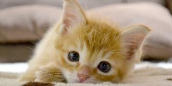 【いい話】我が家の猫は親戚の家の壁をぶっ壊して救出されました