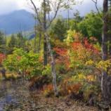 『紅葉真っ盛り』の画像