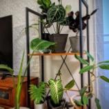 『増え続ける観葉植物』の画像