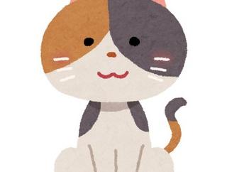 友人がコロナリストラを食らった。支援物資にお腹にたまるお菓子と猫缶を買って、友人の家に遊びに行ったら...。