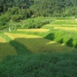 『明日から稲刈り始まります』の画像
