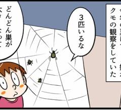 悲しいクモの観察