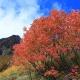 槍沢の紅葉と槍ヶ岳
