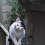 kedarake 猫との暮らしは素敵なことだらけ