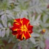 『10月の花』の画像