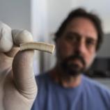 『「君子喩於義」象牙のDNA鑑定で違法取引監視』の画像