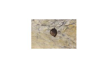 『冬の穴』の画像