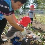 『サツマイモ掘り』の画像
