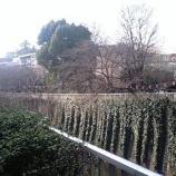 『江戸川橋公園の桜の今』の画像