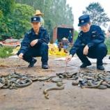 『【新型コロナウィルス】「深セン、ヘビやカエルなどの食用を禁止」』の画像