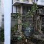 *DIYしたパーゴラにピエールドゥロンサールの長尺を植えました(*´ェ`*)