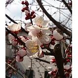 『もうすぐ春ですね〜』の画像