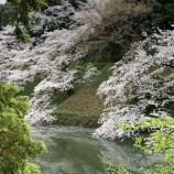 『ゴージャスな桜』の画像