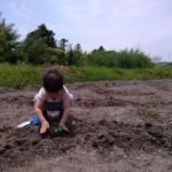 『野菜も植える』の画像