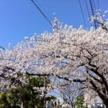『戸田市ボランティア・市民活動支援センター前で開催した「花見だョ!全員集合」の様子です』の画像