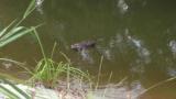 河原で変な生き物見つけたwW