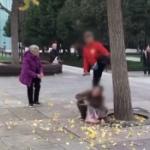 【動画】中国、公園で「ぎんなん」欲しさにイチョウの木にガンガン蹴りを入れる! [海外]
