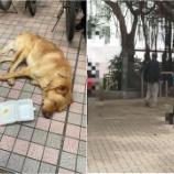 『【香港最新情報】「犬を虐待した疑いで、男性を逮捕」』の画像