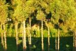 インサイト交野NO.27~私部城址の木が茂ってるところ~