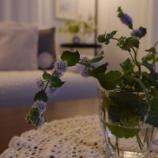 『グリーンと花と過ごす夜のリビングルーム』の画像