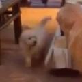 子イヌがこっちにやってくる。ここは通さんぞぉ! → 犬が邪魔するんです…