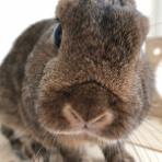Bunny! Bunny!