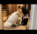 大型犬のグレートデンに襲われ飼い主の女性死亡 米オハイオ州